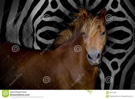 what color is a zebra s skin stock image image of mane zebra mammalian
