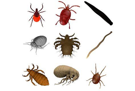 parasiten bett parasiten im bett 187 erkennen bek 228 mpfen