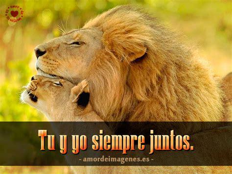 imagenes de leones lindas im 225 genes de enamorados haciendo el amor para descargar