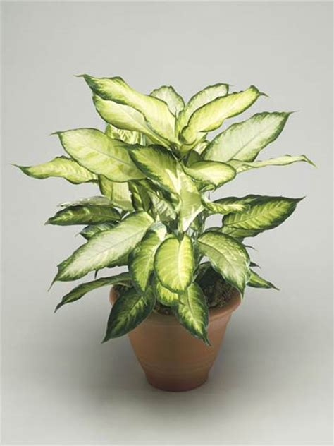 indoor plans the easiest indoor house plants that won t die on you
