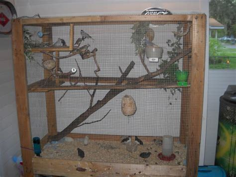 zebra finch housing society finch facts care as pets mutations pictures