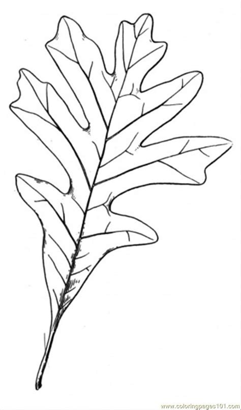 coloring page of oak tree free coloring pages of oak trees