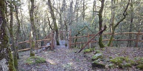 Foresta Di Burgos by Nordic Walking Nella Foresta Di Burgos Domenica 13