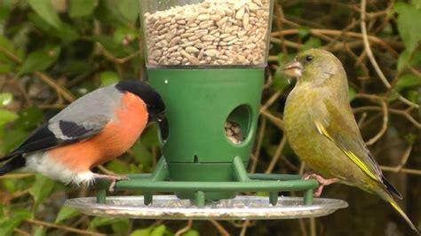 best bird feeder unique bird feeder