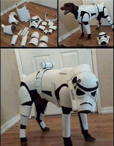 10 Dog Meme