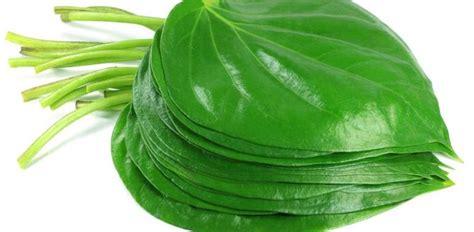 tutorial kepang rambut daun manfaat daun sirih untuk gigi