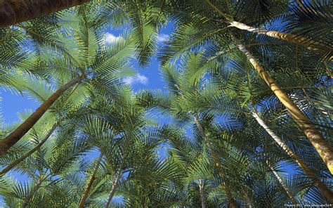 Areca Palm fr 233 d 233 ric bec dypsis lutescens chrysalidocarpus