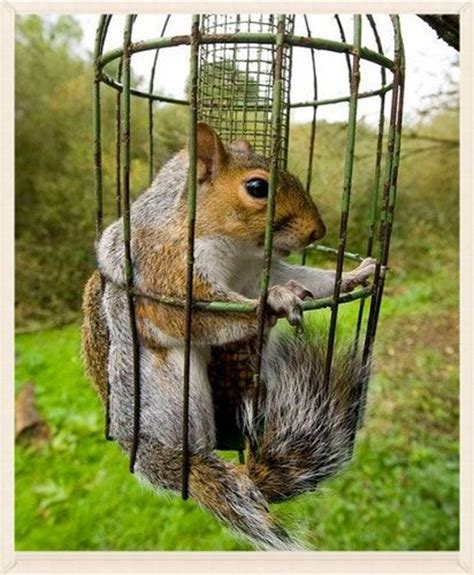 build a squirrel proof deer feeder woodworking projects