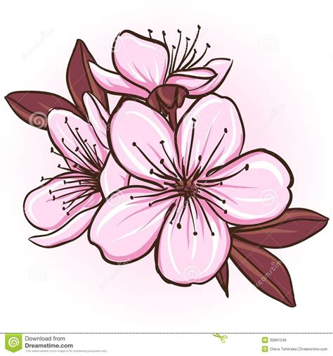 libro cereza guinda cherry flor del cerezo dibujo buscar con google sakura cerezo dibujar y flor