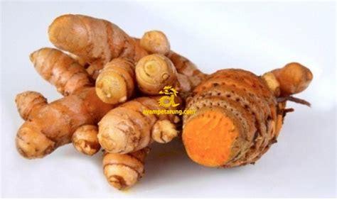 Obat Herbal Untuk Stamina Ayam jamu harian untuk ayam bangkok ayetarung