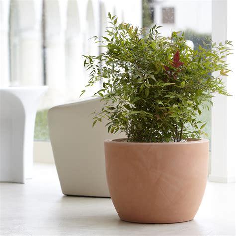 vaso per pianta vaso per piante da interno ed esterno hera nicoli
