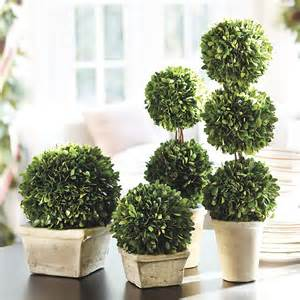 preserved boxwood topiary traditional artificial