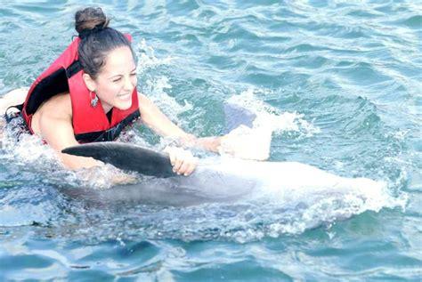 bagno con delfini bagno con i delfini perch 233 non farlo iviaggidiliz