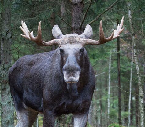 animal elang 201 lan d europe parc animalier de sainte croix