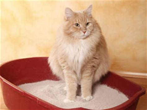 my keeps scratching pets why does my cat keep scratching express yourself comment express co uk