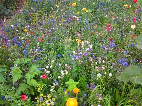garten gestalten wildblumen blumenwiese anlegen so gelingt s gartenanlegen net