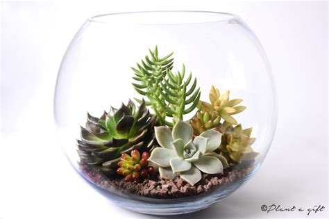 fishbowl diy california succulent