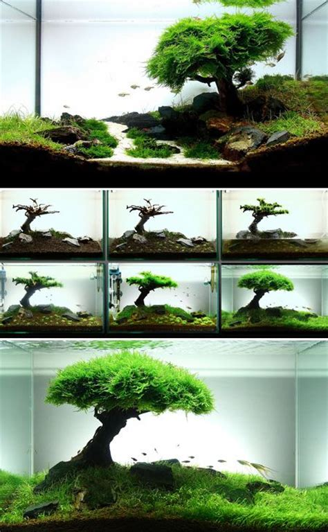 diy aquascape 25 best ideas about aquascaping on pinterest aquarium