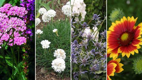 stauden die den ganzen sommer blühen langbl 252 hende stauden die im sommer und herbst bl 252 hen