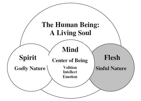 nature and the human soul cultivating wholeness and community in a fragmented world books understanding human nature spirit mind