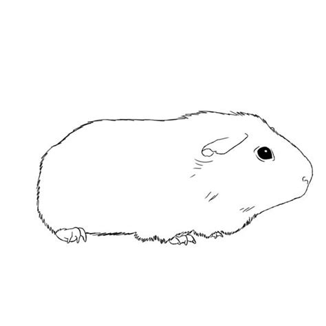 guinea pig coloring pages free printable guinea pig awesome guinea pig coloring page coloring