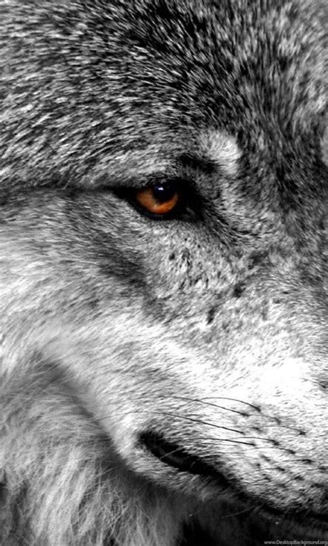 fondos de pantalla lobo todos los wallpapers lobo
