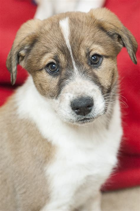 theme names for a litter of puppies best friends animal sanctuary puppy preschool daily dog
