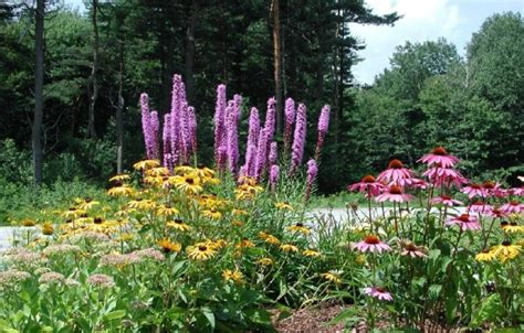 xeriscape backyard how does your garden grow
