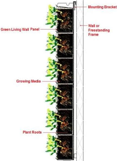 green wall plant wall vertical garden green wall