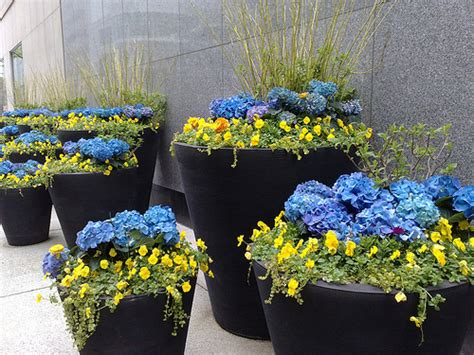 Large Flower Planter by Large Flower Pots Flickr Photo