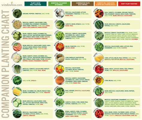 growing chart companion planting chart for vegetables