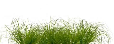 größer wirken gras rainer junker als kunstdruck oder handgemaltes gem 228 lde