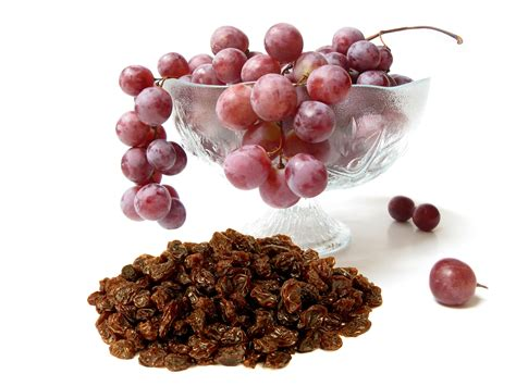 raisins dogs grapes raisins all pet news