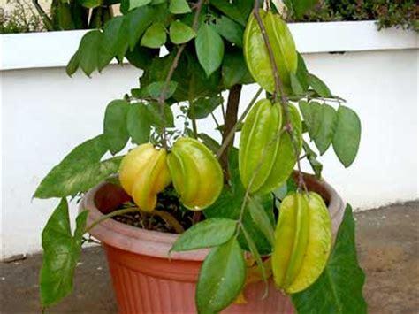 Tanaman Sayuran Dan Bumbu Oregano tanaman apotik hidup dan manfaatnya tanamanbaru