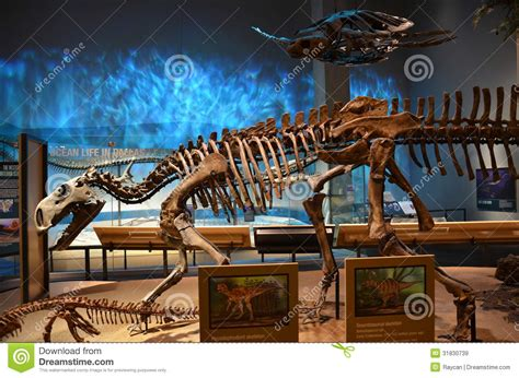 perot museum fossils editorial stock image image of