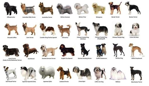 small house dog breeds how to take care of a small dog breed