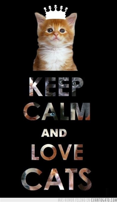 Cat Keeps On by Keep Calm Cats Cats Photo 35483231 Fanpop