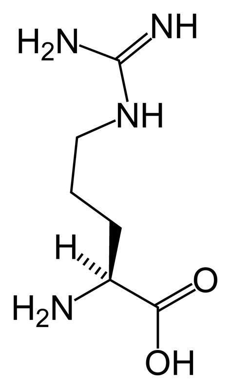 File:L-arginine-skeletal-(tall).png - Wikimedia Commons L Arginine Structure