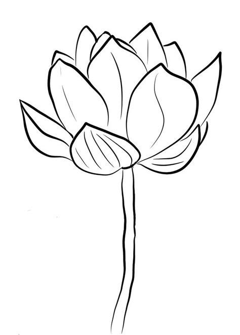 fior di loto disegno disegni da colorare fior di loto stabile gratuito