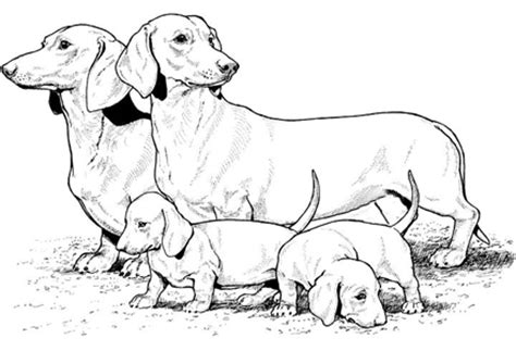 weiner dog coloring page dog coloring pages by yuckles