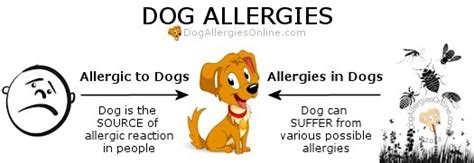 what are dogs allergic to allergies allergic to dogs and allergies in dogs resource
