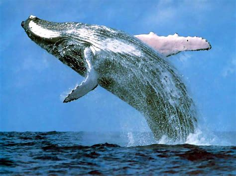 images of a whale whales oceanic explorer