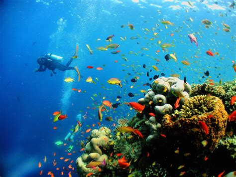 dive places best diving in asia the most beautiful in the