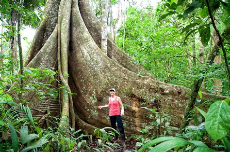 trekking   amazon rainforest earth trekkers