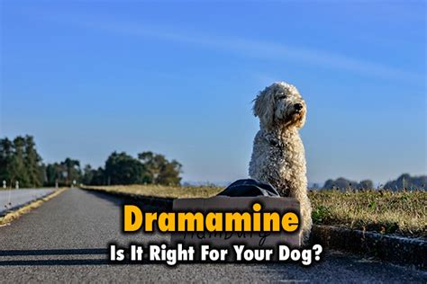 dramamine for dogs dramamine for dogs is it right for your thinkofpuppy