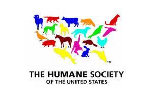 Human Society Volunteering At The Humane Society Outloud Multimedia