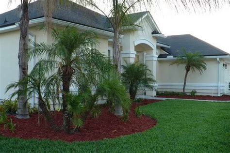 palm trees in front yard 17 best ideas about palm trees landscaping on