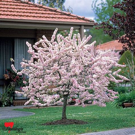 fruit trees for sale perth 26 best ideas about plants on kangaroo paw