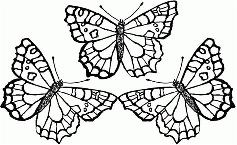 butterfly to color butterfly coloring pages for adults coloring home