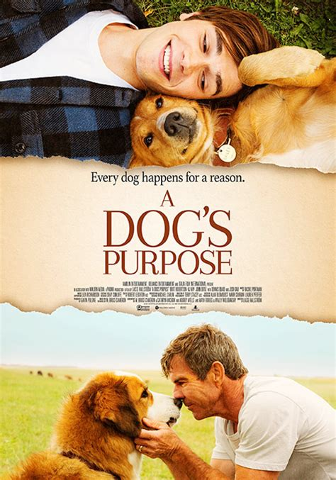 a s purpose dogs a s purpose now showing book tickets vox cinemas uae